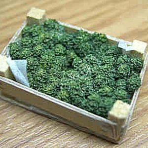 Case of Fresh Brocolli